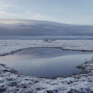 Frozen Marsh - Photograph