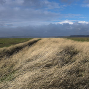 Dyke Grass and Storm - Photograph