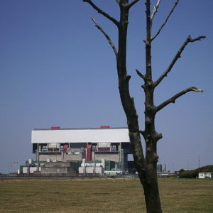 Dead Tree - Digital Photograph