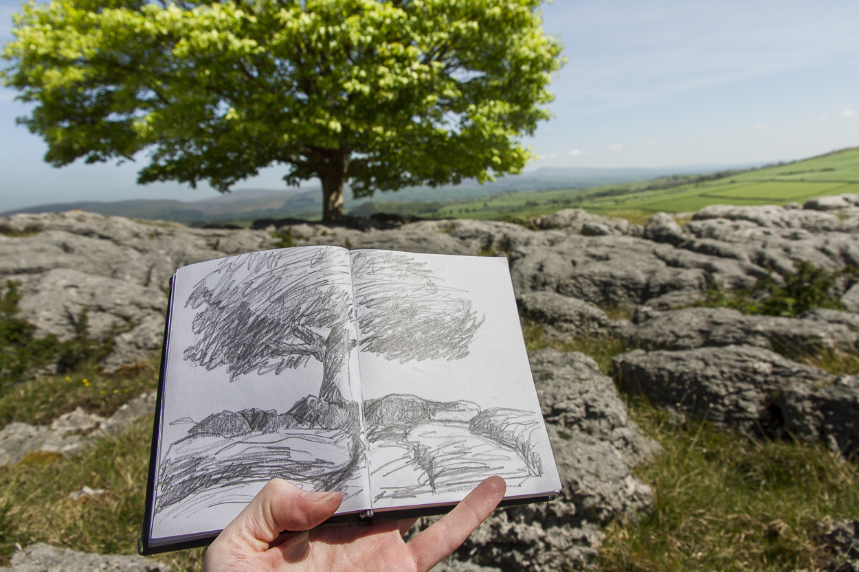 Tree series - Sketching on location - Summer 2014